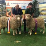 Taljar Polwarths – Interbreed success at Royal Adelaide Show