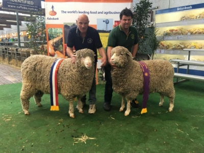 Taljar's Supreme Interbreed Champion Longwool Ram and Reserve Interbreed Interbreed Champion Longwool Ram