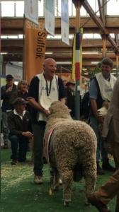 Taljar: Announcement of the Interbreed Champion Longwool Ram