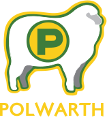 Polwarth: Can't be beat for Wool and Meat