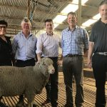 International interest in Australian Polwarth wool